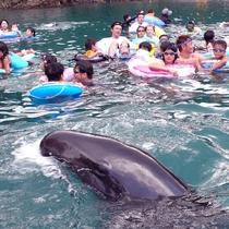 ◆くじらと泳げる海水浴場