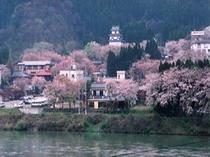 咲花温泉の桜