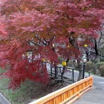 *当館入口の紅葉の様子