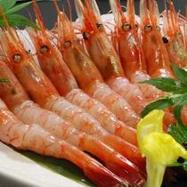 【食事】甘海老の造り<イメージ>
