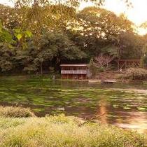 柿田川公園