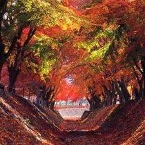 富士河口湖紅葉まつり(毎年11月に開催)