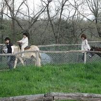 南ヶ丘牧場