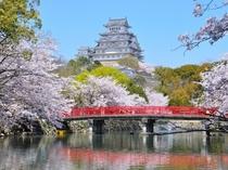 姫路城、サクラ