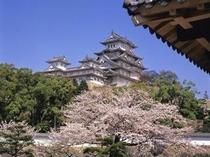 姫路城、春(桜)