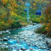 ロープウェーから紅葉と川の流れを楽しむ