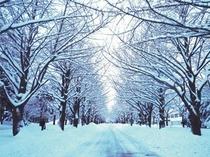 北海道大学・冬