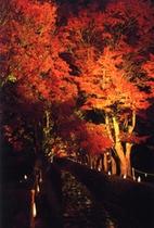 河口湖・紅葉祭り