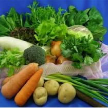 地元野菜を中心に新鮮な食材を揃えています