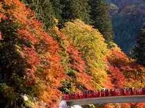 【周辺施設】香嵐渓 ホテルより車で40分 紅葉の名所です。