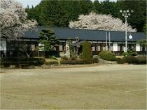 三代校舎津金学校と桜