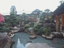 錦鯉が遊ぶせせらぎ、情緒豊かな日本庭園