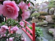 つばき:庭園