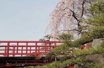 喜仙庭園:しだれ桜の頃(4月上中旬)