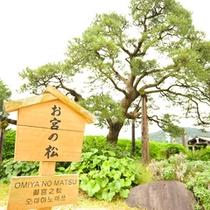 待ち合わせスポットとしても使われるお宮の松は、熱海サンビーチのほぼ中央付近です。