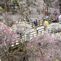 熱海梅園の梅 2014年梅まつりは1月11日(土)〜3月9日(日) まで!
