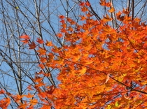 秋の紅葉 6