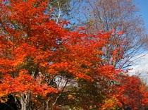 秋の紅葉3