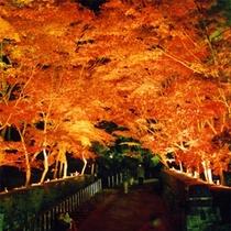 松風山荘の紅葉のライトアップ