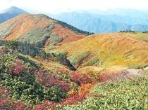 巻機山(登山口まで当ロッヂから車で約25分)