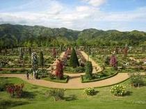 河津バガテル公園ではたくさんのバラを楽しむことができます