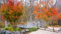 大浴場「古民家の湯」の外湯、岩露天。秋のもみじが美しいです。