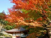 ■秋 長谷寺
