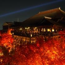 【期間限定】燃えるような紅葉と清水寺のライトアップは圧巻の一言!2016年は11/12~12/4予定