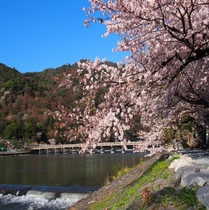 【嵐山・渡月橋】桜