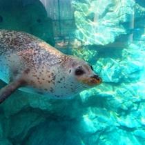 【京都水族館】ファミリー&カップルにおすすめ!かいじゅうゾーンで可愛いあざらしにキュンっ☆
