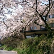◆高台にある当館「萩高山」と桜