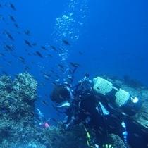 ダイビング|青海島の海中世界で非日常を体験
