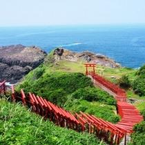 123基で連なる「元乃隅稲成神社」は大人気の観光スポット