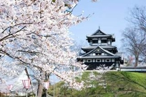 桜と高田城
