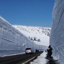 *【雪の回廊】雪の回廊と吸い込まれそうな青空に心を奪われます。