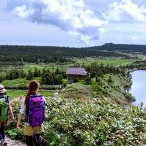 *八幡平自慢の高山植物と湖沼群の眺めをお楽しみいただけます♪