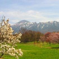 *【桜風景】