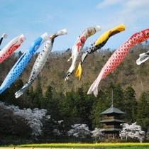 ■観光:安久津八幡神社と桜