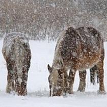冬の寒立馬