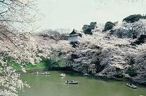 千鳥が淵(日本武道館)
