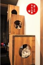 ねこ処みなみ家には猫が喜ぶ仕掛けがいっぱい!