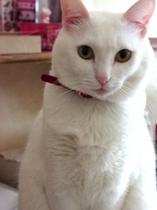招き猫(?)のクー