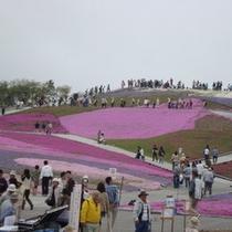 ☆茶臼山の芝桜 500x500