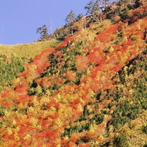 ☆ヘブンス秋の富士見台高原