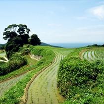 〓淡路島の棚田風景〓