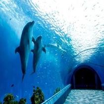 【観光情報 八景島シーパラダイス】180度の水槽がある水族館。まるで水中散歩をしている気分です♪