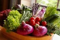新鮮地元野菜