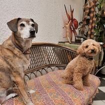 ■ ペットと泊まれる宿…シーガル