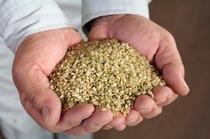 【自社農場】 緑米