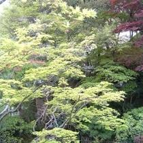 庭園初夏①